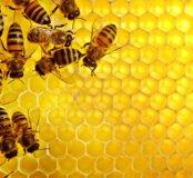 Мёд липа+разнотравье