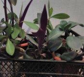Комнатный растения