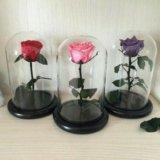 Вечно живущие цветы