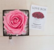 Стабилизированный розы