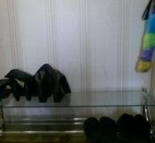 Под обувь