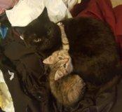 Отдам котенка и кота