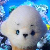 Морской котик из меха норки