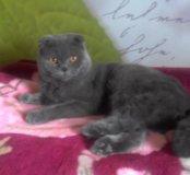 Серьезный кот для вязки