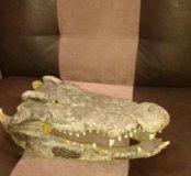 Голова крокодила натуральная