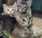 Котики в Тарко-Сале