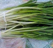 Продаю лук зеленый