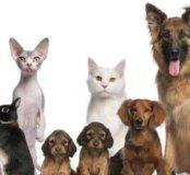 Присмотрю за Домашними животными