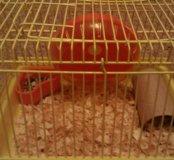 Клетка для грызунов.15*20
