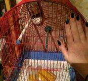 Клетка для попугая 🕊