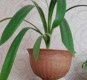 Распродажа комнатных растений