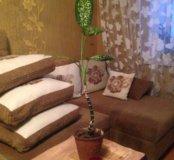 Цветок диффенбахия.