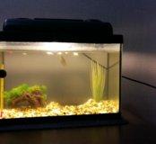 Аквариум на 15 л  с рыбками