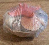 Морские ракушки