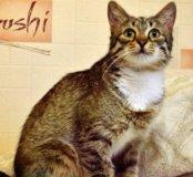 Брошенная кошка Мышаня ищет новую семью