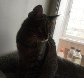 Котик 6 лет кострированный