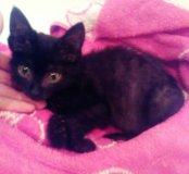 Котёнок 1,5 месяца