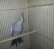 Попугайчик с клеткой
