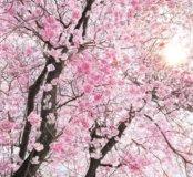 """XXL4-046 Фотообои KOMAR """"Bloom"""" 368смх2,48м"""