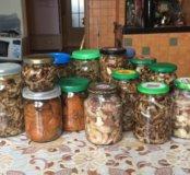 Продам грибочки разные