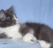 Котёнок в добрые руки,котенок в дар,котенок Жаннэт