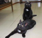 Котята в добрые руки,котёнок даром ТИМ и ТОМ
