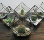 Геометрические флорариумы