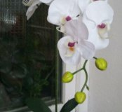 Композиция с сенсорной орхидеей