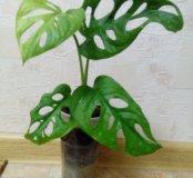 Вьющиеся растение