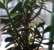Растения комнатные горшочные