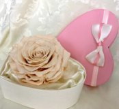 Вечная - живая роза