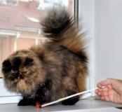 Кошка ищет друга