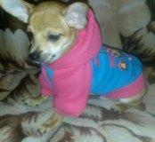 Курточка для щенков.
