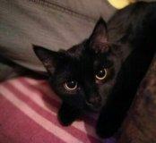 Кошка 1 год