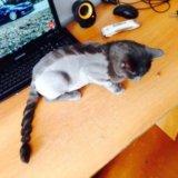 Стрижка кошек на дому и с выездом
