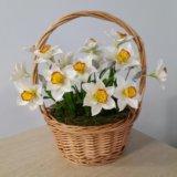 Цветы из полимерной глины (готовые и на заказ)