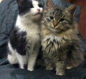 Кошки и кот в дар
