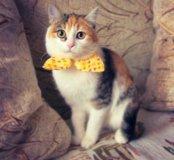 Кошка Тюпа