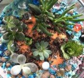 8 марта Сухой аквариум
