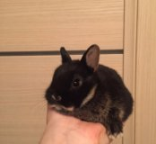 Филя. Породистый кролик