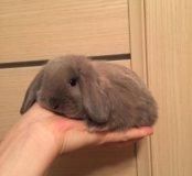 Ля-ля вислоухий кролик