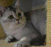 Вязка с котом в драгоценной шубке