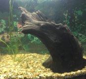 Коряга для аквариума