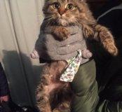Очаровательный котёнок в добрые руки !