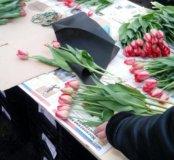 Тюльпан элитный оптом