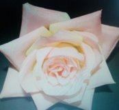 Остролистная роза