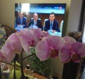 Продаю орхидею