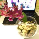 Флорариум с орхидейкой