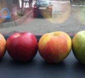 Яблоки с собственного сада КБР