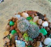 Флорариумы мини-садики кактус